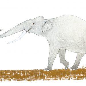 Слонът и пеперудът от Е. Е. Къмингс